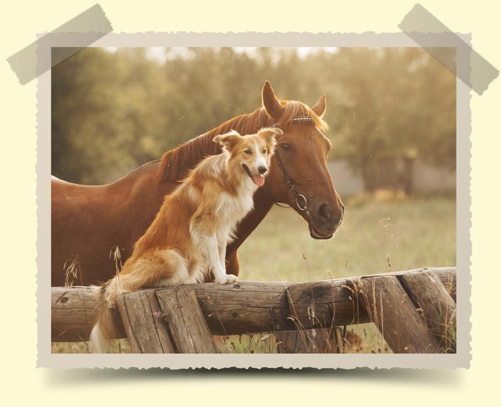 Futtermittel Suling Pferd und Hund auf Wiese in Bilderrahmen Bremen